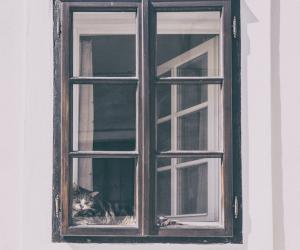 Malerfirma - vinduer